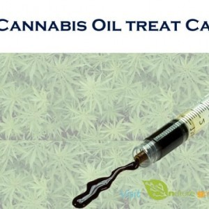 Does Cannabis Oil treat Cancer? on Vimeo