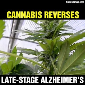 Cannabis reverses late-stage Alzheimer's on Vimeo